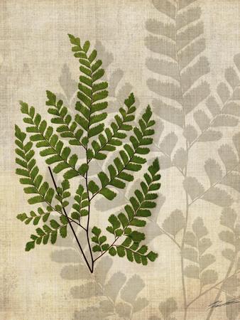 https://imgc.artprintimages.com/img/print/british-ferns-vi_u-l-pxn5j60.jpg?p=0