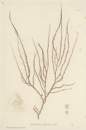 https://imgc.artprintimages.com/img/print/british-sea-weed_u-l-pvcfit0.jpg?p=0