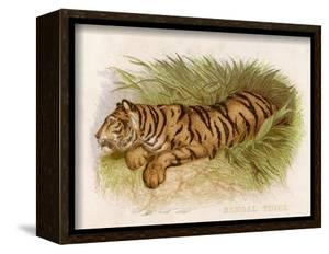 Bengal Tiger Resting by Brittan