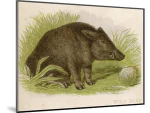 Wild Boar Seated in the Undergrowth by Brittan