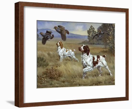 Brittany Spaniels Flush Three Birds from Cover in a Meadow-Walter Weber-Framed Photographic Print