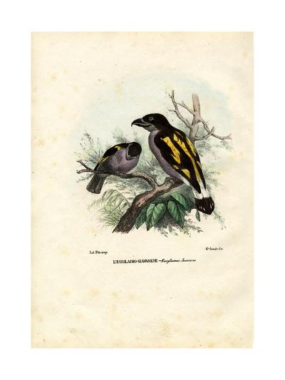 Broadbills, 1863-79-Raimundo Petraroja-Giclee Print