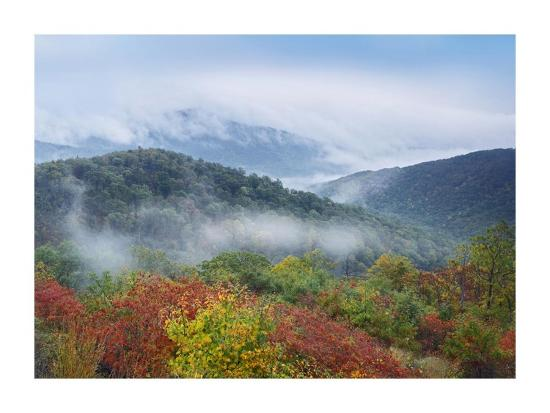 Broadleaf forest in fall colors, Skyline Drive, Shenandoah National Park, Virginia-Tim Fitzharris-Art Print