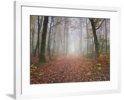 Broceliande Forest-Philippe Manguin-Framed Photographic Print