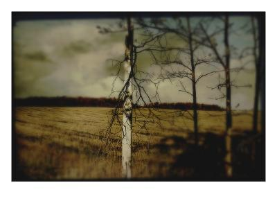 Broken Branches on Tree-Mia Friedrich-Photographic Print