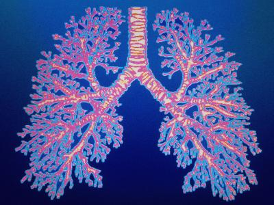 Bronchial Tree of Lungs-PASIEKA-Photographic Print