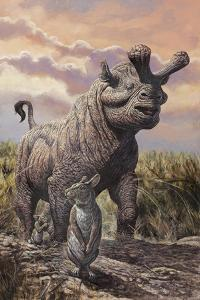 Brontops and Palaeolagus Rabbit of the Early Miocene Epoch