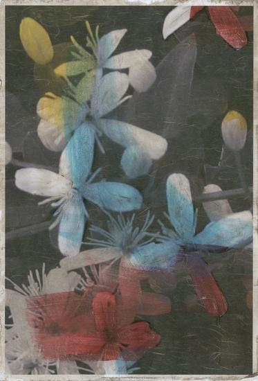 Brooklyn Bloom II-Megan Meagher-Art Print