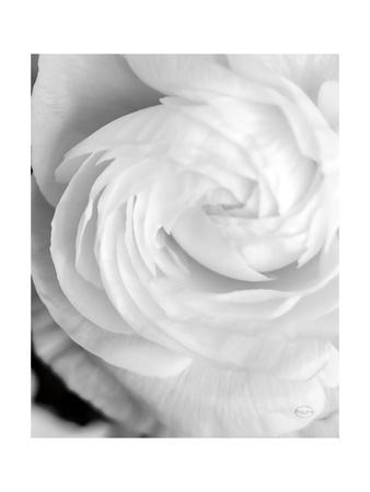 Black And White Petals I