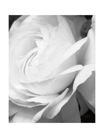 Black And White Petals II