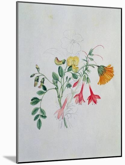 Broom and Marigolds-Caroline Louisa Meredith-Mounted Giclee Print