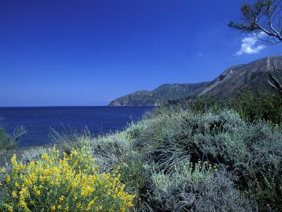 Broom Flowers and the Mediterranean Sea, Sicily, Italy-Michele Molinari-Photographic Print