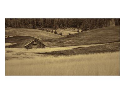 Brown Barn in the Blonde Gra-Don Schwartz-Art Print