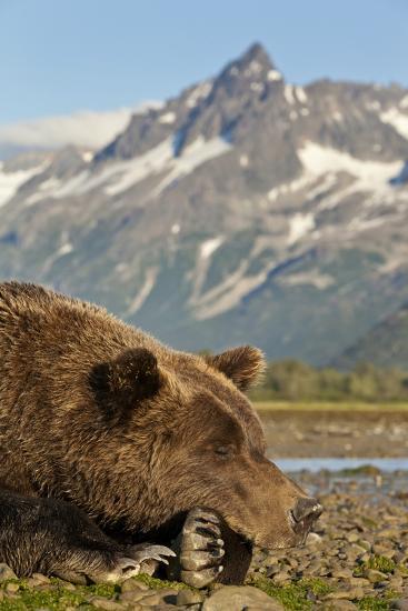 Brown Bear and Coastal Mountains, Katmai National Park, Alaska-Paul Souders-Photographic Print