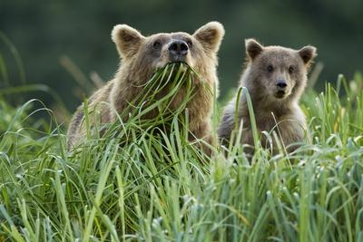Brown Bear and Cub, Katmai National Park, Alaska-Paul Souders-Photographic Print