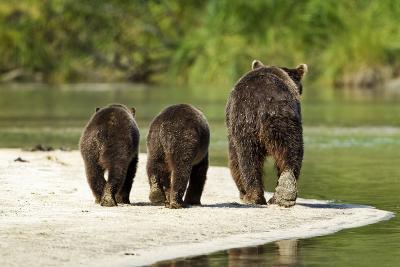 Brown Bear and Cubs, Katmai National Park, Alaska--Photographic Print