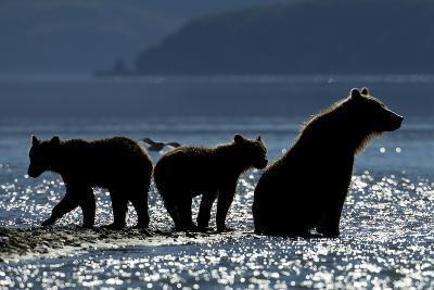Brown Bear and Cubs, Katmai National Park, Alaska-Paul Souders-Photographic Print