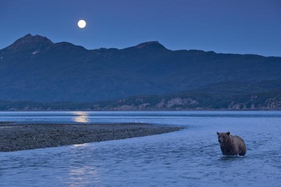 Brown Bear and Full Moon, Katmai National Park, Alaska-Paul Souders-Photographic Print