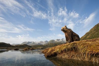 Brown Bear and Mountains, Katmai National Park, Alaska--Photographic Print