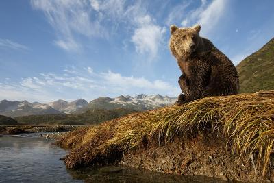 Brown Bear and Mountains, Katmai National Park, Alaska-Paul Souders-Photographic Print