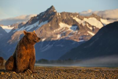 Brown Bear at Dawn, Katmai National Park, Alaska-Paul Souders-Photographic Print
