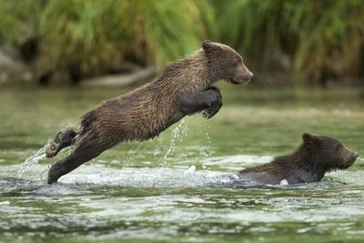 https://imgc.artprintimages.com/img/print/brown-bear-cub-katmai-national-park-alaska_u-l-pzmi930.jpg?p=0