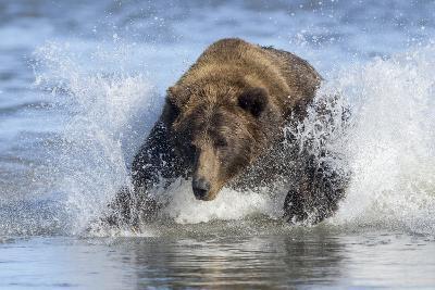 Brown Bear Fishing at Silver Salmon Creek Lodge in Lake Clark National Park-Charles Smith-Photographic Print