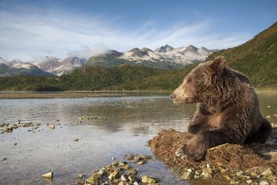 https://imgc.artprintimages.com/img/print/brown-bear-katmai-national-park-alaska_u-l-pzmnlg0.jpg?p=0