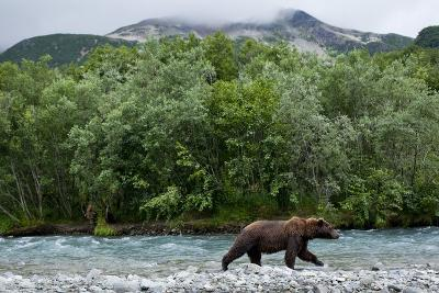 Brown Bear, Katmai National Park, Alaska-Paul Souders-Photographic Print
