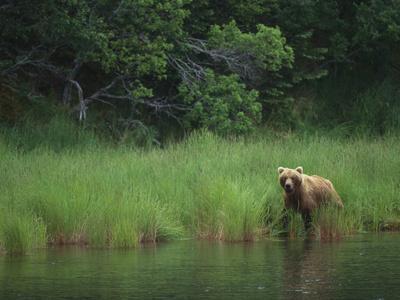 https://imgc.artprintimages.com/img/print/brown-bear-on-riverbank_u-l-pzra6a0.jpg?p=0