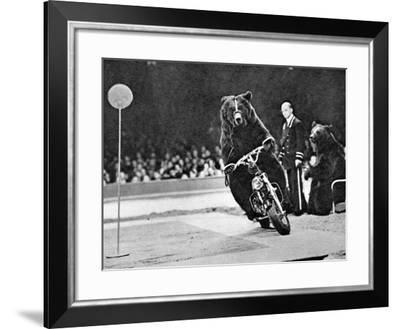 Brown Bear Riding a Motorcycle at the Bertram Mills Circus--Framed Photographic Print