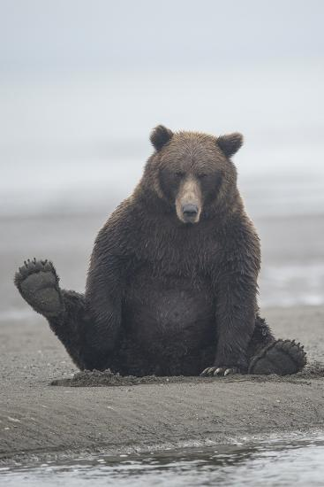 Brown Bear Sitting on Sand at Silver Salmon Creek Lodge in Lake Clark National Park-Charles Smith-Photographic Print