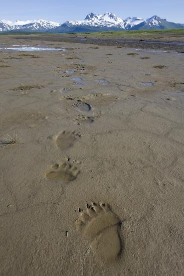 Brown Bear Tracks at Hallo Bay in Katmai National Park-Paul Souders-Photographic Print