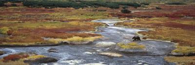 https://imgc.artprintimages.com/img/print/brown-bear-ursus-arctos-crossing-river-kamchatka-russia_u-l-peu8n60.jpg?p=0