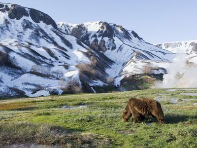 https://imgc.artprintimages.com/img/print/brown-bear-ursus-arctos-foraging-kamchatka-russia_u-l-peu8f10.jpg?p=0