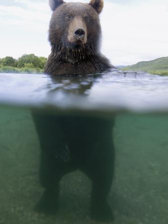 https://imgc.artprintimages.com/img/print/brown-bear-ursus-arctos-in-river-kamchatka-russia_u-l-peu8dz0.jpg?p=0