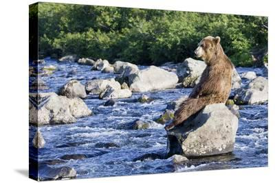 Brown Bear (Ursus Arctos) Sitting on Rock in River, Kamchatka, Russia-Sergey Gorshkov/Minden Pictures-Stretched Canvas Print