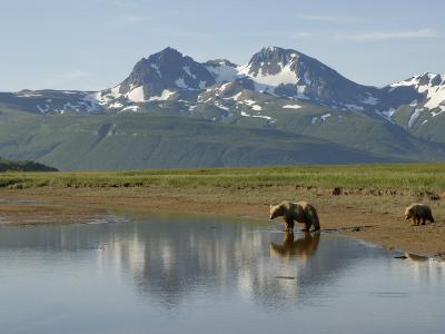 Brown Bear with Cub (Ursus Arctos) Crossing Creek, Alaska-Tom Walker-Photographic Print