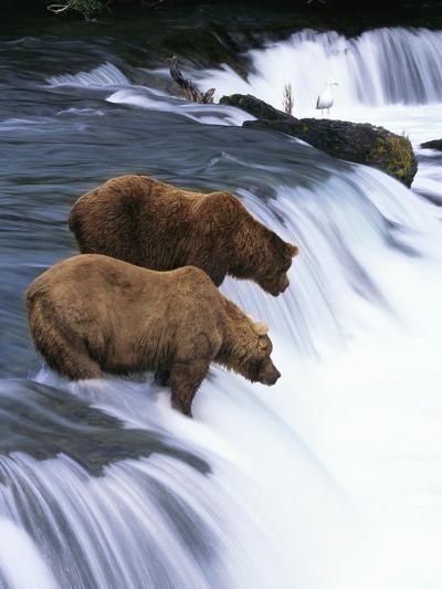 Brown Bears Fishing at Brooks Falls-Jeff Vanuga-Photographic Print