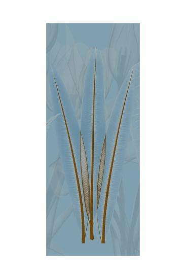 Brown Blue Palm-Albert Koetsier-Premium Giclee Print