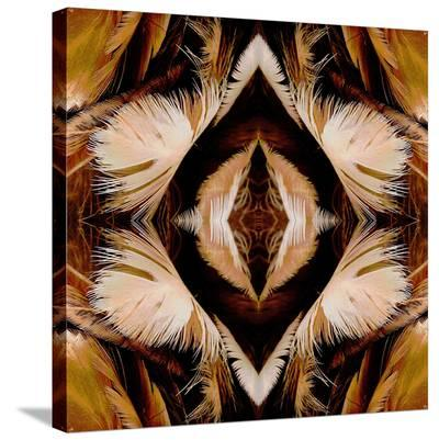 Brown Feathers X2-Rose Anne Colavito-Stretched Canvas Print
