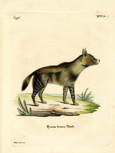 Brown Hyena--Giclee Print