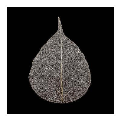 Brown Leaf-PhotoINC Studio-Art Print