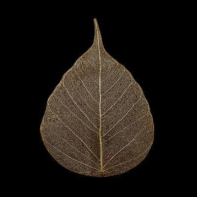 Brown Leaf--Photographic Print