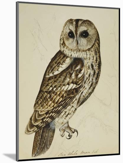 Brown Owl (Strix Ulula)-Reverend Christopher Atkinson-Mounted Premium Giclee Print