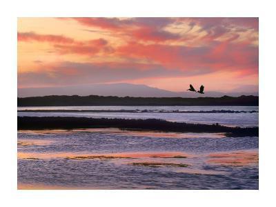 Brown Pelican pair flying at Moss Landing, California-Tim Fitzharris-Art Print