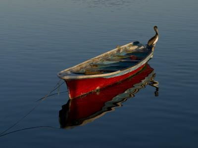 Brown Pelican Sitting on a Anchroed Boat-Ralph Lee Hopkins-Photographic Print