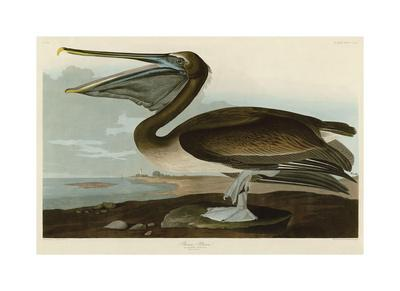 https://imgc.artprintimages.com/img/print/brown-pelican_u-l-f6cbpp0.jpg?artPerspective=n