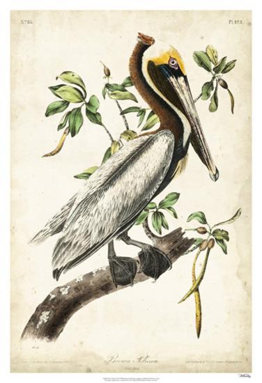 Brown Pelican-John James Audubon-Giclee Print