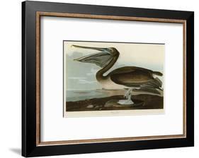 Brown Pelican-John James Audubon-Framed Art Print